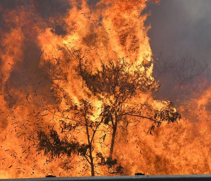 Brush fire envelopes tree in Hawaii